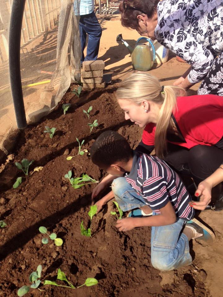 Age Home: TLC Old Age Home Vegetable Garden Project