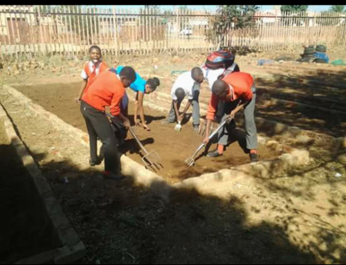 Cleopatra Mbatha :  Doing a vegetable garden at Boepathutse Junior Secondary School in Soshanguve