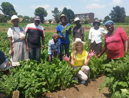 Vegetable Garden for #Foodsecurity